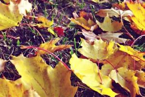 Per lapų paklodę vaikščioti neteks – jie šluojami 2 kartus per savaitę.